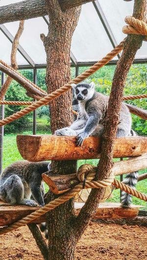 Pets Monkey