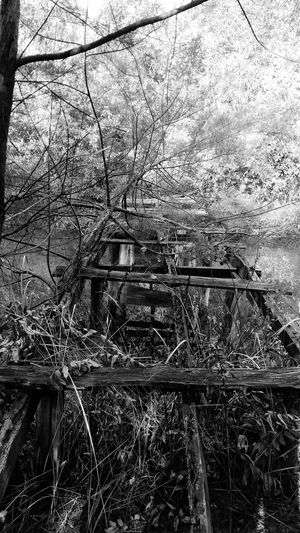 deadlock Black And White Wooden Bridge Pattern, Texture, Shape And Form Tree Branch Backgrounds Full Frame Close-up Sky