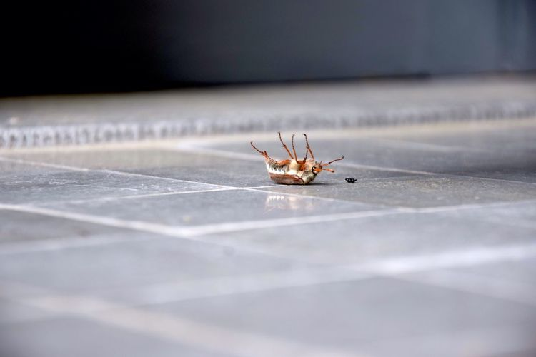 Dead insect on tiled floor
