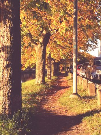 Amazing Autumm♥ Fave  BestDayEver❤ Soon Halloween Halloween Fallday Amazing View Yellow Orange Leaves