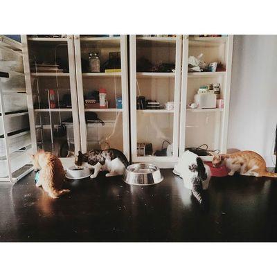 放飯... Breakfast Morning Nightsnack Overnights Canton Guangzhou Meow Cat Kitty
