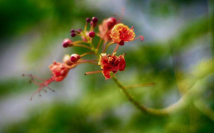 Natural Nikon D3200 Nikon 50mm F/1.8 Flower EHSAN ERSAN / EhsanErsan@gmail.com