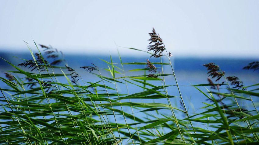Darß Baltic Sea Germany Nature Photography Naturephotography Nature_collection Sea sunset #sun #clouds #skylovers #sky #nature #beautifulinnature #naturalbeauty photography landscape