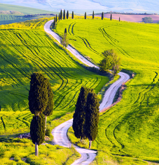 Tuscania, Italy Beautiful Grass Green Color Relaxing Tuscany Wonderful Beauty In Nature Italy