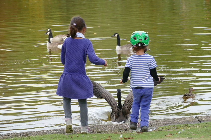 Children Flying Swan Happiness Running Swimming Backgrounds Child Childhood Day Duck Flying Flying Bird Flying Birds Garden Kid Lake Nature Outdoors Play Playing Plying Swan Swim Water Waterfront