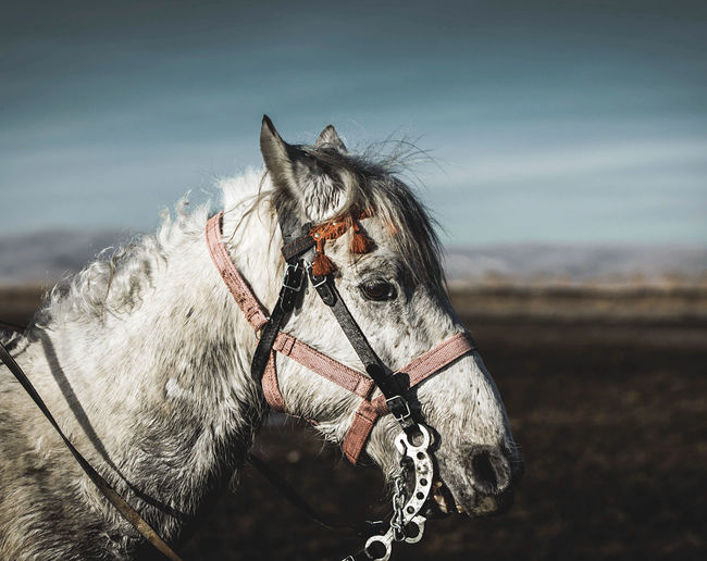 Close-up of horse standing outdoors