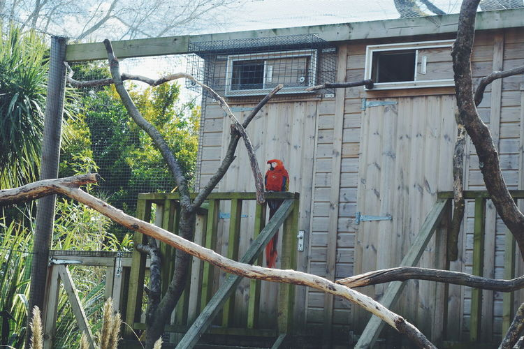 Macaw Parrot Architecture Built Structure Closed Day Growth Lifestyles Nature Outdoors Plant Tree Wood - Material