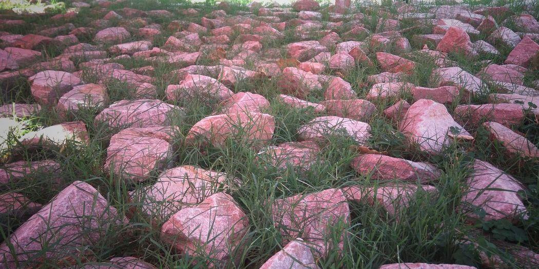 Flower Backgrounds Full Frame Pink Color Plant