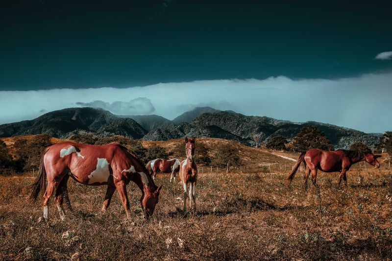 Horses on grassy field by mountains against cloudy sky