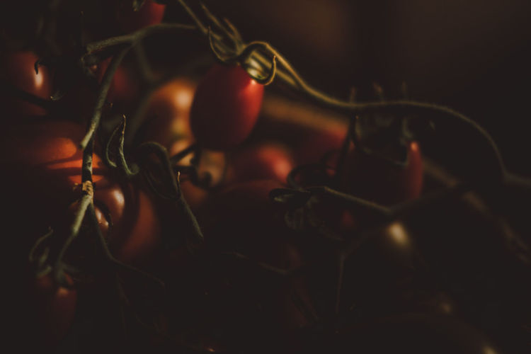 Close-up of red tomatoes in dark