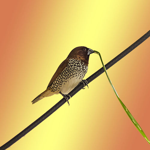 Close-up of bird perching on wooden pole against clear sky
