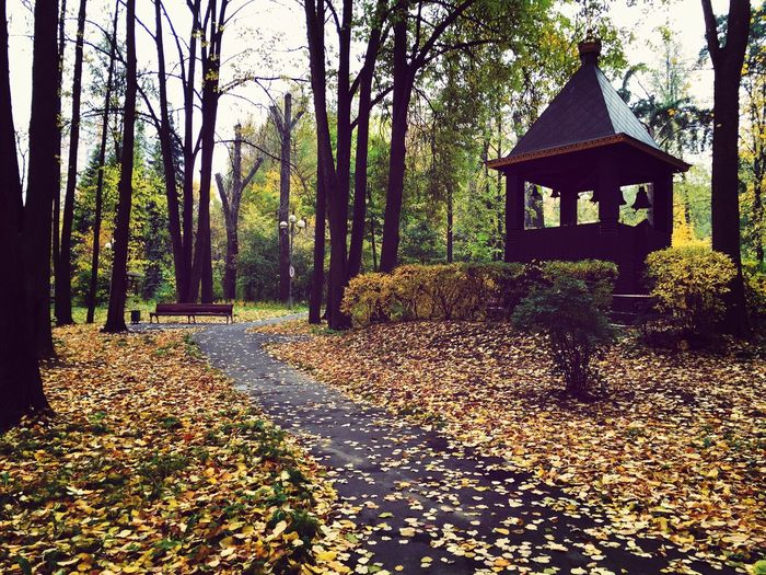 Leaffall Autumn Belltower