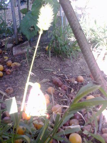 Glitch Wolfzuachis Romania Beauty Redefined Light Nature Fruits Slowfood Fruit Fruct