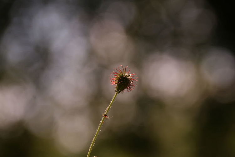 Beauty of a withered plant Withered Plant Insect In Front Of A Tree Focus On Foreground EyeEm Selects Springtime Rural Scene Beauty Uncultivated Plant Part Sunlight
