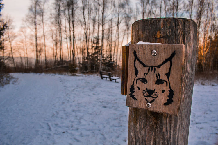 wooden sign of lynx in winter landscape, walking trail sign leading to lynx sanctuary in Harz Mountains, Germany Germany Harz Harzmountains Mountains Outdoors Forest Winter Snow Idyllic Saxony-Anhalt Schierke Landscape Lynx Lynx Lynx Wooden Sign Signpost Walking Trail Sunset Track Cold Temperature Tree Wood - Material Nature No People Day Plant Focus On Foreground Bare Tree Communication Land Frozen Close-up Environment Text Wooden Post
