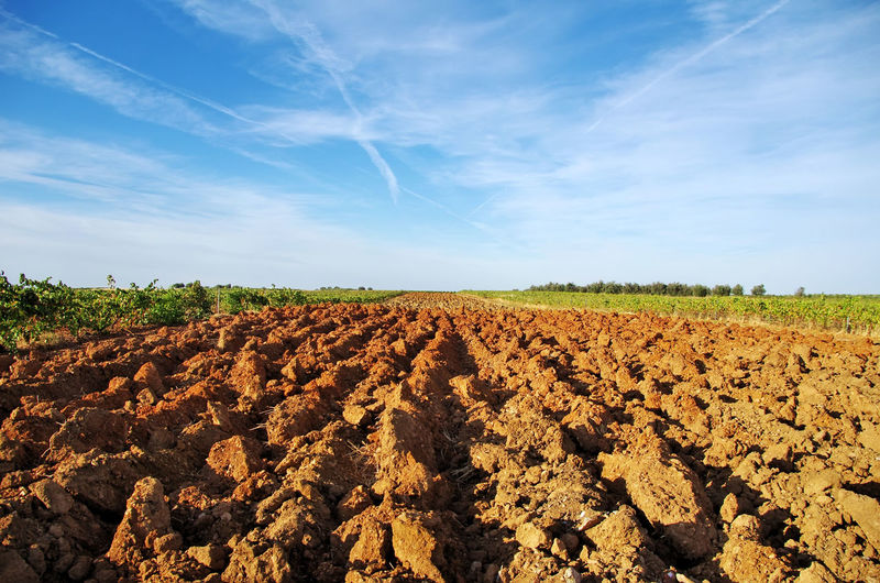 Scenic View Of Plowed Agricultural Field Against Sky