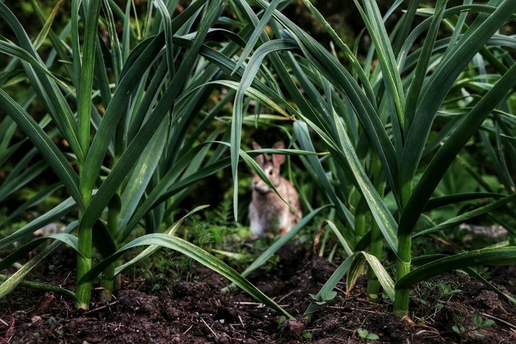 The Standoff Outdoors Backyard Photography Bunny  Eating Nature Beauty In Nature Light And Shadow Walking Around Sunny Day Garden Ontario, Canada Growing Stalk
