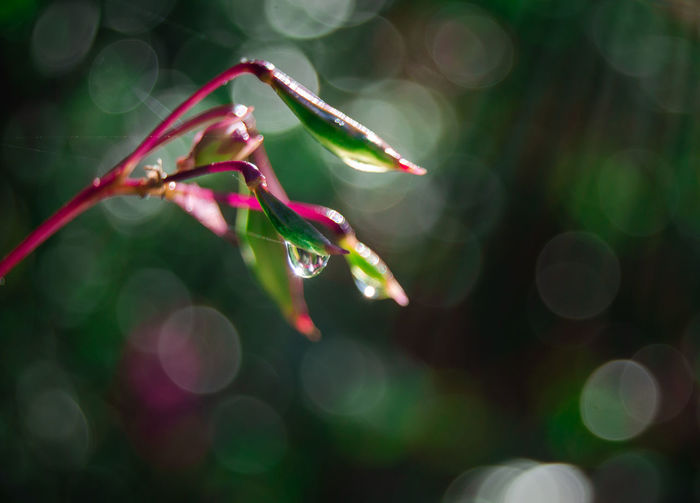 Plant Growth Close-up Beauty In Nature Nature Selective Focus Green Color Vulnerability  Focus On Foreground No People Fragility Plant Part Leaf Freshness Outdoors Tranquility Dew Wet Lens Flare Day Morning Dew Dew Drops Autumn Nature Belarus Nature Drop