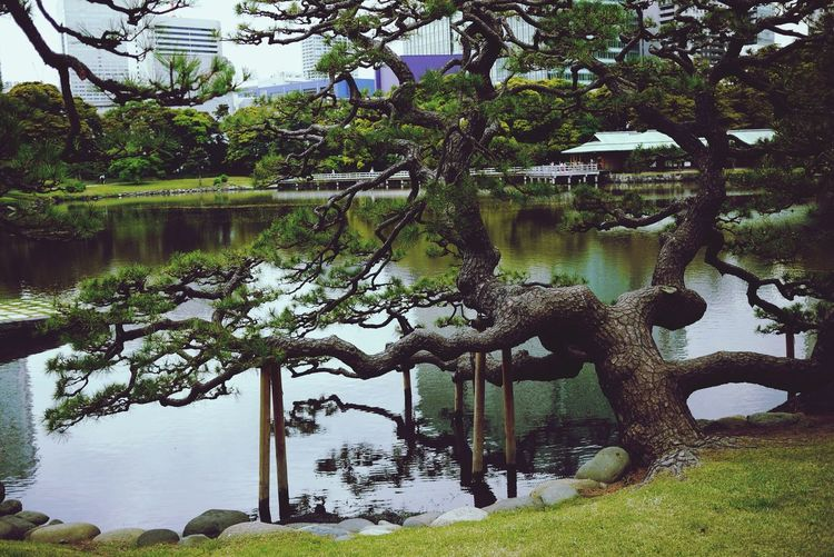 Eyeem Garden EyeEm Nature Lover EyeEm Japan Hamarikyu Gardens Trees Gardens Tokyo