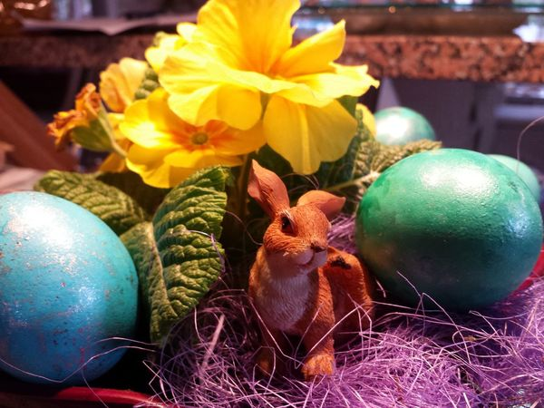 Easter Bunny Easter Grass Ladyphotographerofthemonth Colourful Easter Is Coming Soon Colourful Food Colourful Eggs Painted Eggs Coloured Eggs Easter Ready Easter Eggs Easter Easter Arrangement Still Life Easter Egg Easter Ready EyeEm Beliebte Fotos Popular Photos Flower Collection Flower Yellow Flower Primroses Primeln
