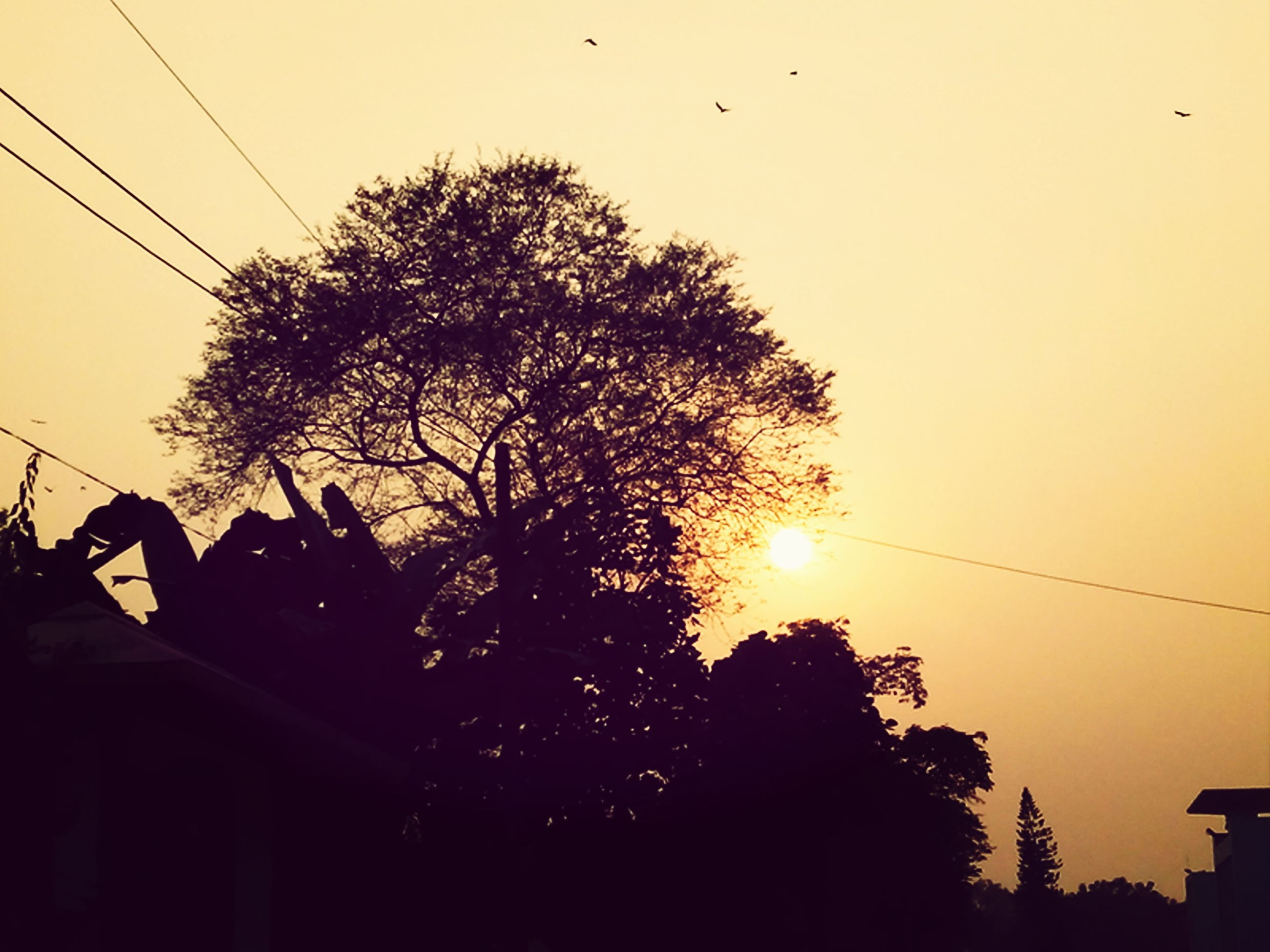 sunset, silhouette, power line, low angle view, tree, cable, bird, animal themes, sky, electricity pylon, orange color, animals in the wild, wildlife, flying, electricity, nature, sun, power cable, connection, beauty in nature