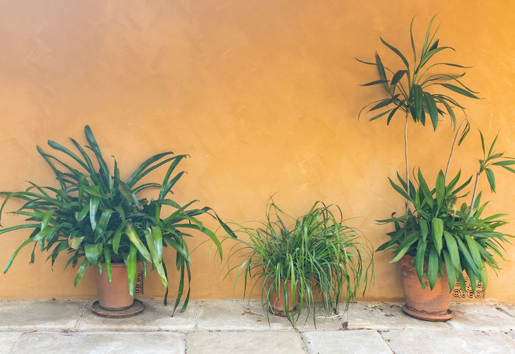 Green leafy plants in terracotta pots against wall Plant Growth Wall - Building Feature Potted Plant Nature No People Leaf Plant Part Green Color Wall Day Built Structure Architecture Outdoors Orange Color Beauty In Nature Close-up Side By Side Palm Tree Houseplant