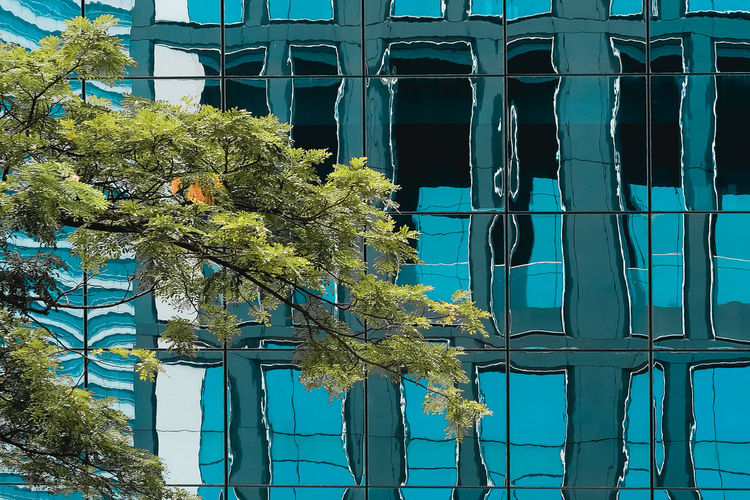 Urban Jungle - Steel and glass Architecture And Nature Architecture Blue Branch Building City Green Color Heat Protective Gl No People Office Building Outdoors Reflection Reflective Architecture Sunlight Tinted Glass Turquoise Colored The Architect - 2018 EyeEm Awards