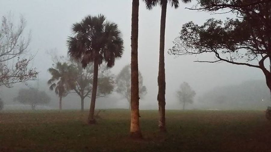 And the fog rolled in... and it looked Awsome, creepy but awesome. Fog Florida Saltlife HistoricCoastCulture Staugustine Downtown Uptown Borrillos