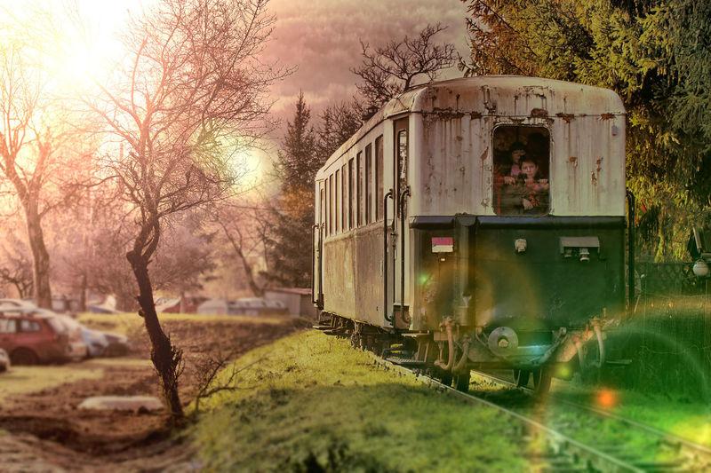 Train on railroad track amidst trees