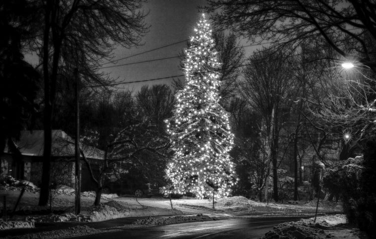 """I'm dreaming of a white Christmas, just like the ones I used to know. Where the tree-tops glisten...."" EyeEm Best Shots EyeEm Best Shots - Black + White Eye For Photography Christmas Tree"
