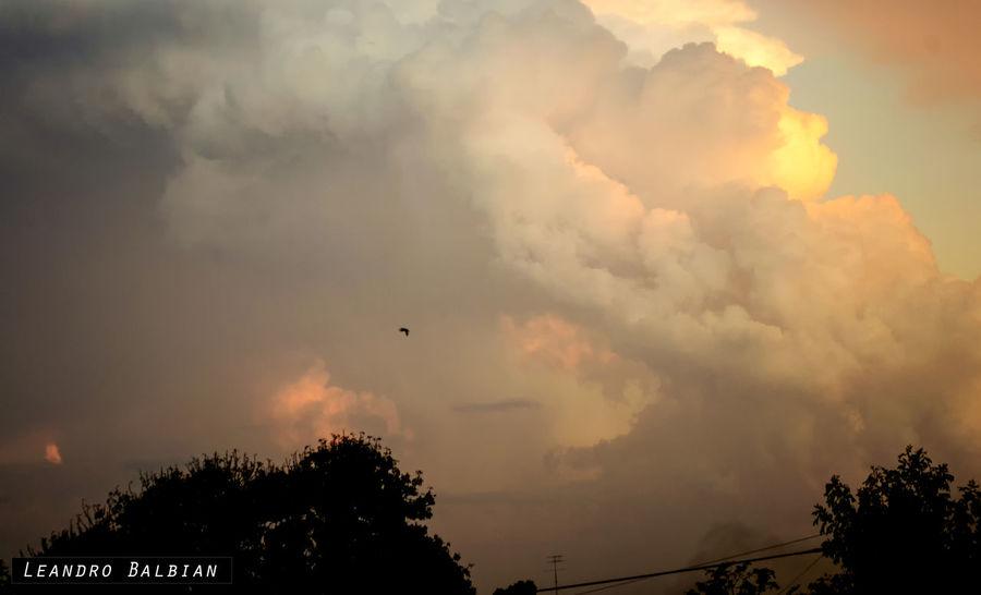 Cloud Cloud - Sky Day Nature Nubes Outdoors Sky Tree