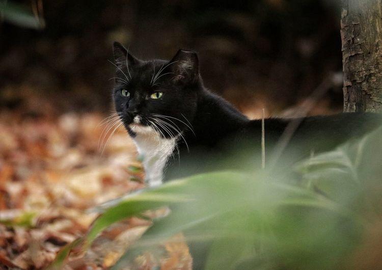 Hide & Seek Cat