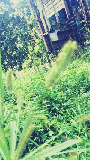 I feel the green field First Eyeem Photo