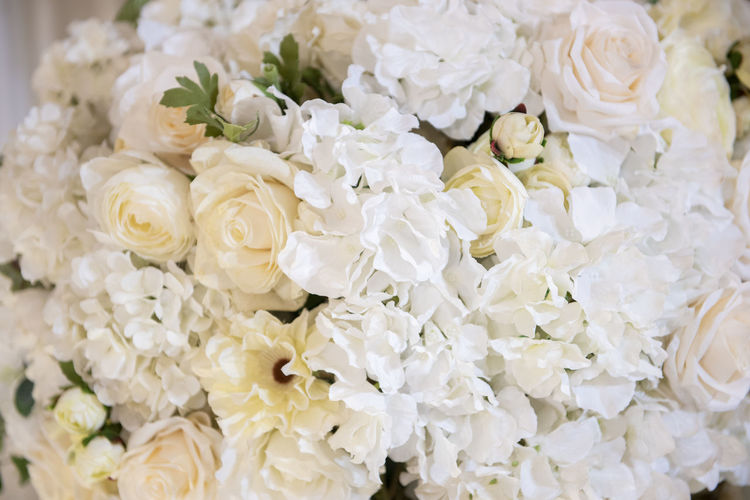 Close-up of white roses decorated at wedding ceremony