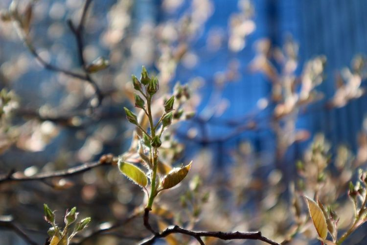 Spring Blossom Plant Growth Beauty In Nature Focus On Foreground Close-up Nature No People Twig Flowering Plant Plant Part Vulnerability  Fragility Outdoors Flower Selective Focus Tranquility Day Branch Sunlight Tree