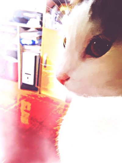 Cat Animals Taking Photos Edit is weird lol