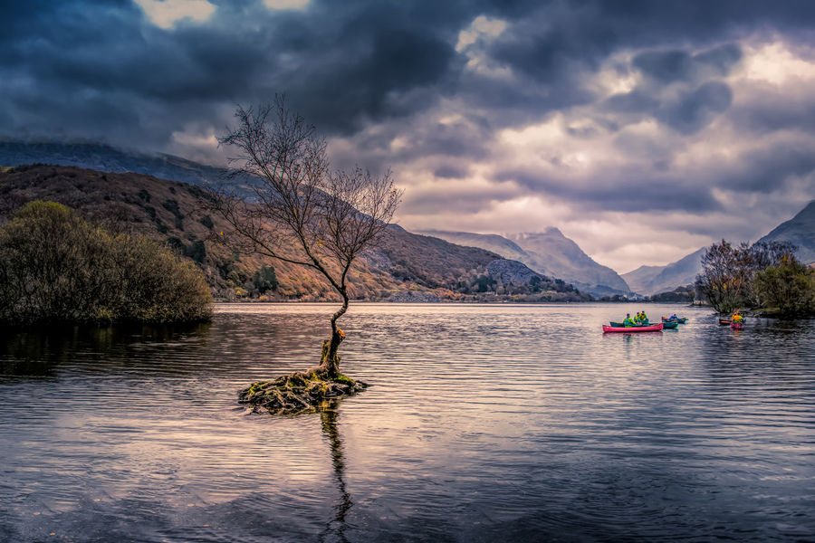 Storm clouds gather over Llyn Padarn with a lonely tree and canoeists EyeEmNewHere Wales Beauty In Nature Canoes Cloud - Sky Ellyn Padarn Lake Llanberis Lonely Tree Mountain Mountain Range Nature Outdoors Reflection Scenics Storm Clouds Tranquility Tree Water
