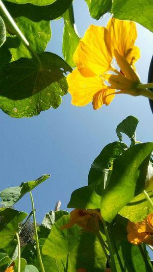 Flowers,Plants & Garden Perspective Lookingup POV Nature Beauty