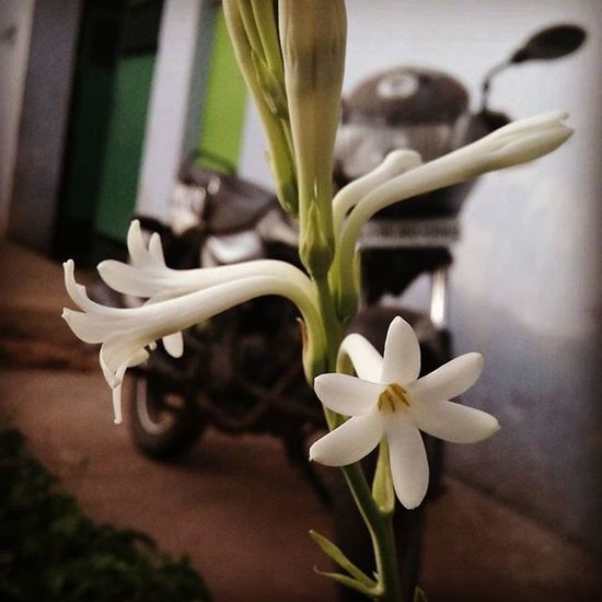 Street Flower Flowers Ontheroad Loveit Takeapicture Coimbatore Travel