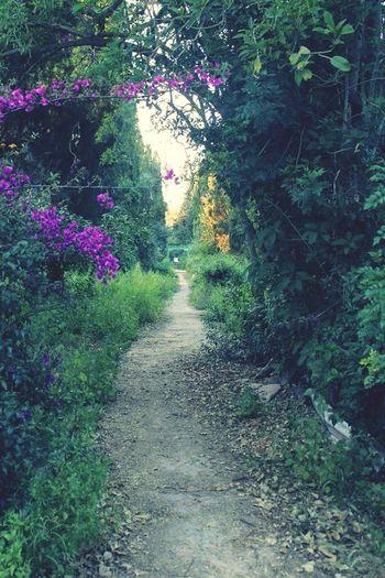Nature Green Tunis Walking Around