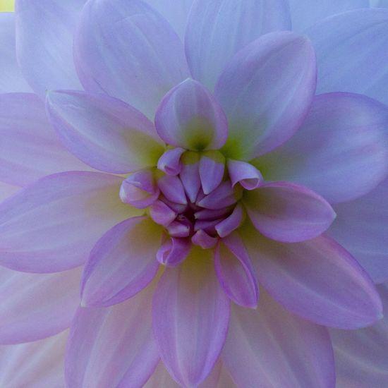 Flower Flowering Plant Vulnerability  Fragility Plant Beauty In Nature Petal