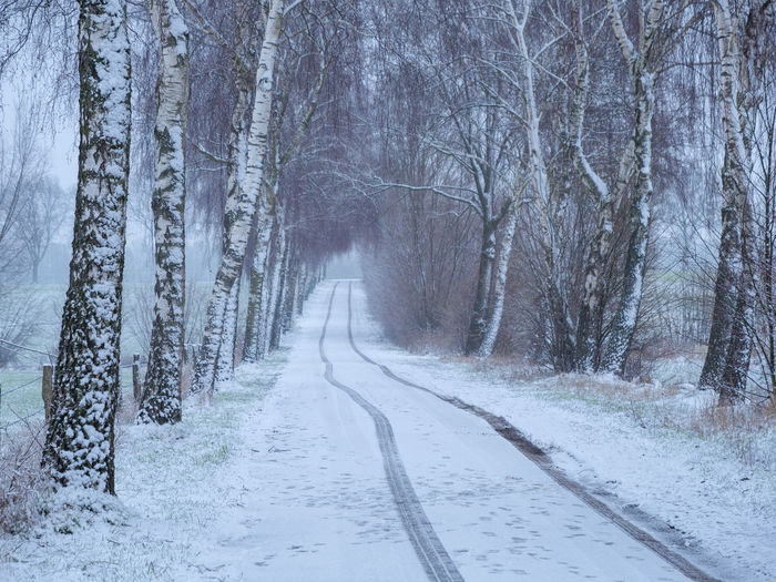 Snow covered road amidst trees in forest