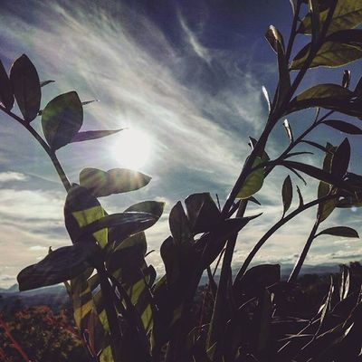 🌿 ☀ . Sun Sunlight Sunshine Sky Leaf Leaves Plants Clouds Lightandshadow SkyClouds Skylovers Cloudslovers Natura Naturelovers Nature October Fall Autumn Autunno  Foglie Sole Igersitalia Igersmarche Igeurope Liveloveitaly landscape