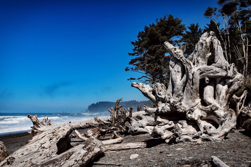 Rialto Beach Olympic National Park Tree Water Sea Sky Beach Nature Scenics - Nature Beauty In Nature Tranquility Blue Clear Sky Outdoors Driftwood Tranquil Scene No People