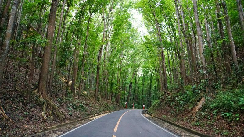 Manmade Forest Road Path Nature Trees