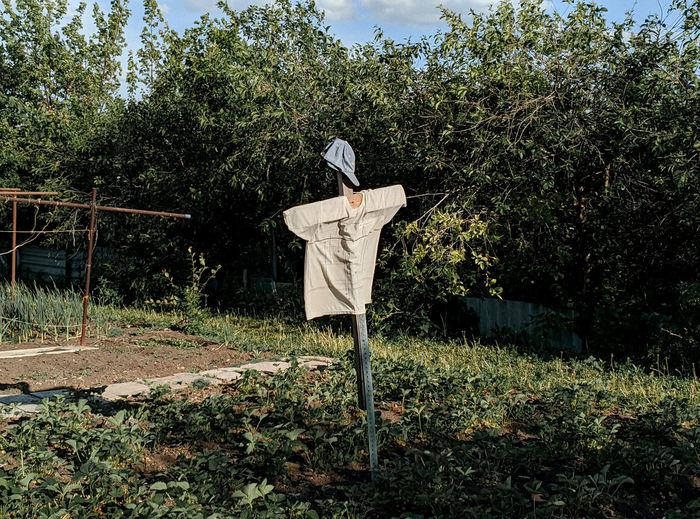 Bird on wooden post on field