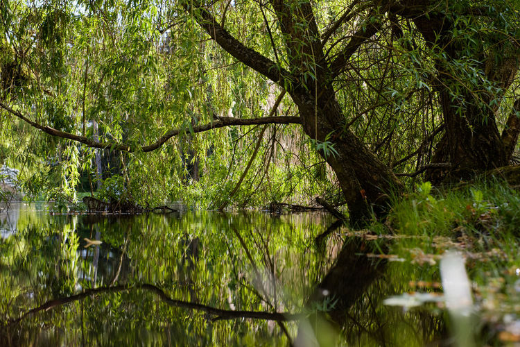 Beauty In Nature Branch Day Forest Green Color Growth Lake Land Nature No People Non-urban Scene Outdoors Plant Reflection Scenics - Nature Swamp Tranquil Scene Tranquility Tree Water