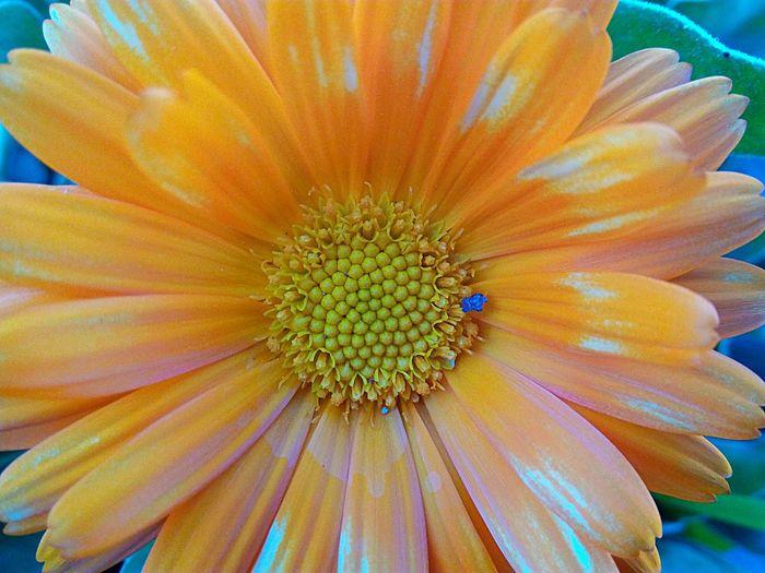 Esplendor. Flower Petal Fragility Beauty In Nature Flower Head Nature Growth Pollen Freshness Plant Outdoors Close-up Springtime
