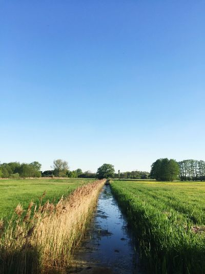 Sky Plant Agriculture Field Clear Sky Landscape Water Tranquility Copy Space Land Day Nature Rural Scene Tranquil Scene Growth Scenics - Nature Blue Farm Beauty In Nature No People