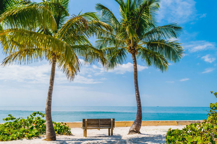 Maimi Nature Beach Beauty In Nature Cloud - Sky Coconut Palm Tree Day Growth Horizon Horizon Over Water Land Nature No People Outdoors Palm Tree Plant Scenics - Nature Sea Sky Tranquil Scene Tranquility Tree Tropical Climate Tropical Tree Water